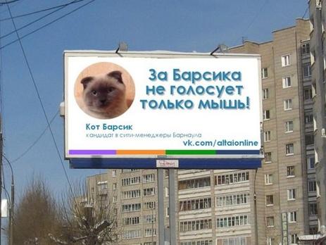 Вк кот барсик