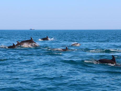 Дельфины В Черном Море Фото