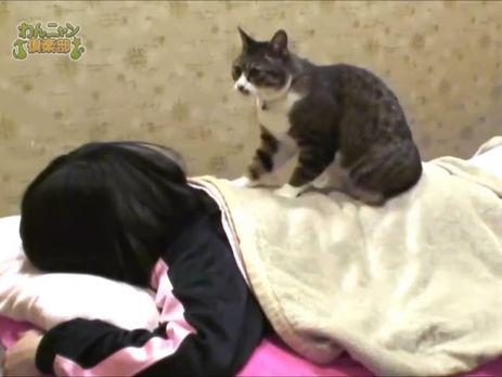 """Кот """"разминает"""" спину клиента салона через ткань"""