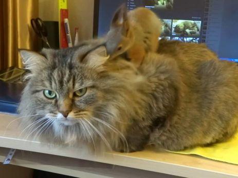 """Кот стоически выдержал """"массаж"""""""