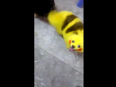 Животное раскрасили краской в цвета Пикачу