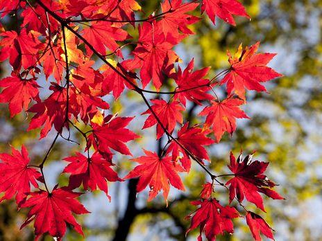 У найтепліший день цьогорічної осені температура піднялася до +31,3 °С