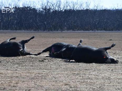"""Ученые утверждают, что цифра в 1 млрд погибших животных """"консервативна"""""""