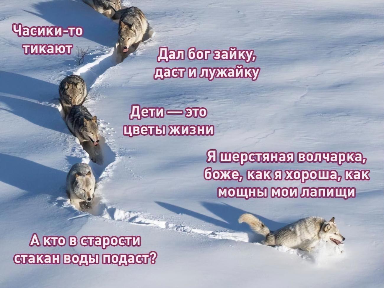 картинка я шерстяной волчара россии этих