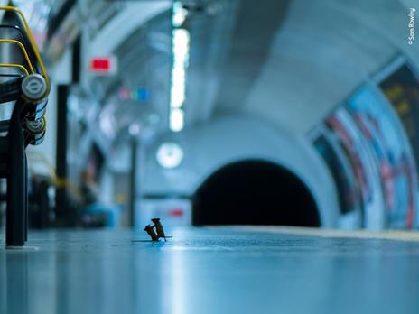 Фотографу удалось запечатлеть драку мышей за крошку, которую обронил пассажир
