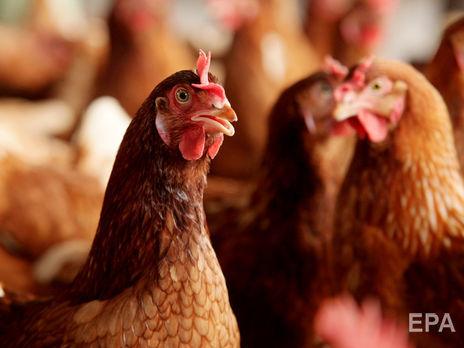 ЄС припинив імпорт м'яса птиці з України 23 січня 2020 року