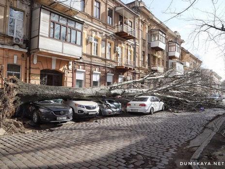 Сильный ветер валил деревья