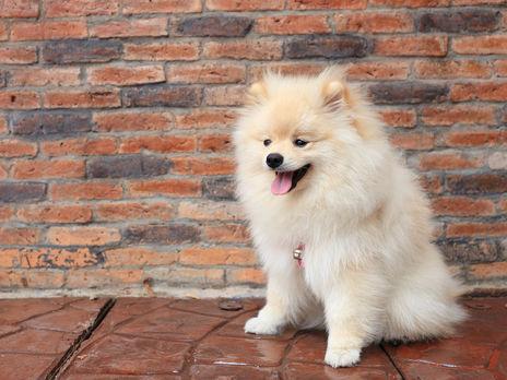 Исследование подтвердило, что собаки могут заражаться коронавирусом от человека