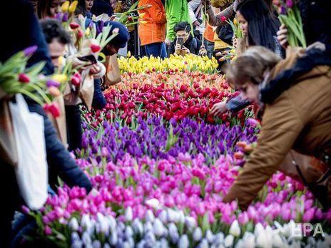 В Нидерландах из-за пандемии коронавируса уничтожают урожай тюльпанов