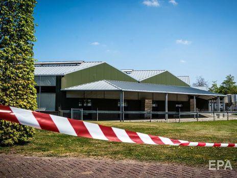 В Нидерландах коронавирусом заразились норки, две фермы изолировали