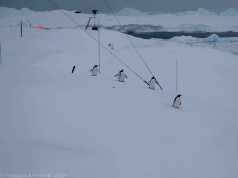 Сейчас в Антарктиде разгар зимы