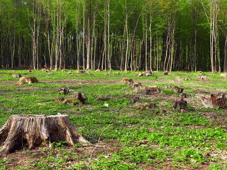 Убытки экологии увеличились на 3% по сравнению с 2019 годом
