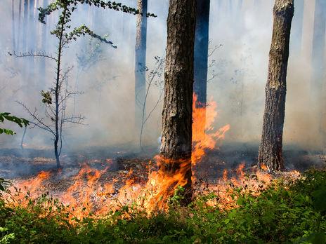 Законопроєкт про посилення захисту лісів від пожеж підтрималл 311 нардепів