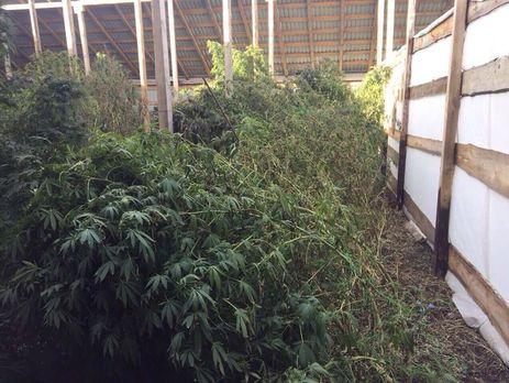 Кировоград марихуана марихуана для туристов в голландии