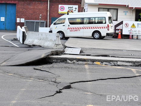 Коровы наостровке после землетрясения— Новая Зеландия