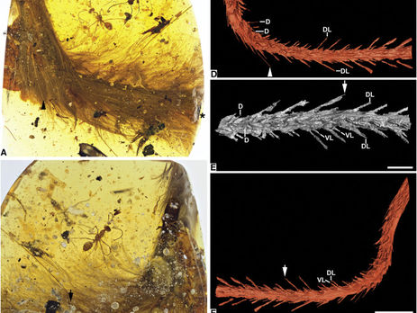 ВМьянме найден покрытый перьями фрагмент хвоста динозавра