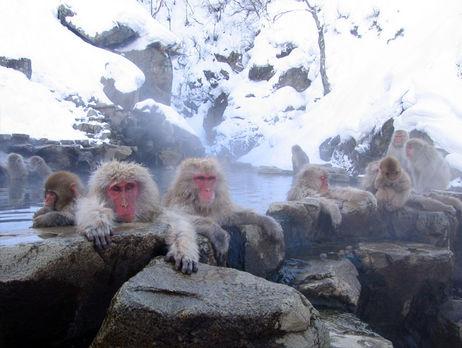 Российская Федерация запустит наМарс обезьян-космонавтов