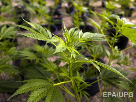 ВГермании узаконили медицинское употребление марихуаны