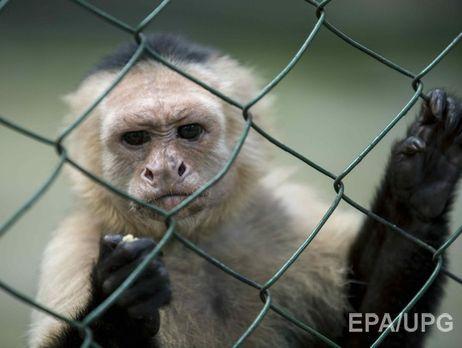 ВСумах через ProZorro пытались приобрести обезьяну-капуцина