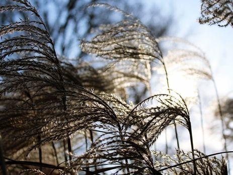 Вгосударстве Украина 23февраля кое-где ожидаются сильные порывы ветра