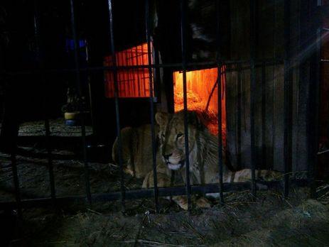 ВЗапорожье ночью намужчину напал лев