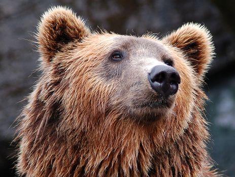 Секс тварин ведмед