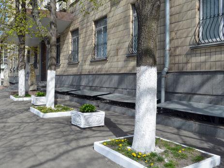 ВКиеве запретили белить деревья ибордюры