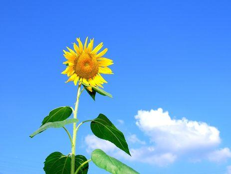 Перший температурний рекорд літа вже зафіксовано уКиєві