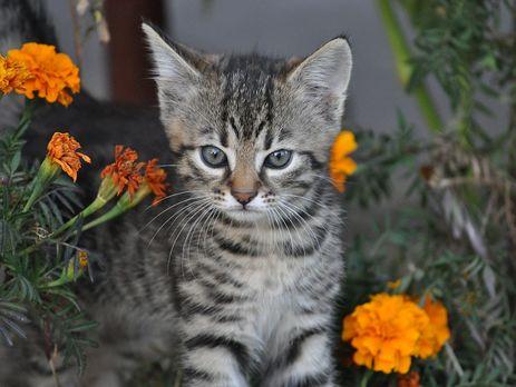 Житель Луцка получил 5 лет тюрьмы заиздевательства над котенком