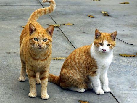 В Киеве котов признали важным элементом городской среды