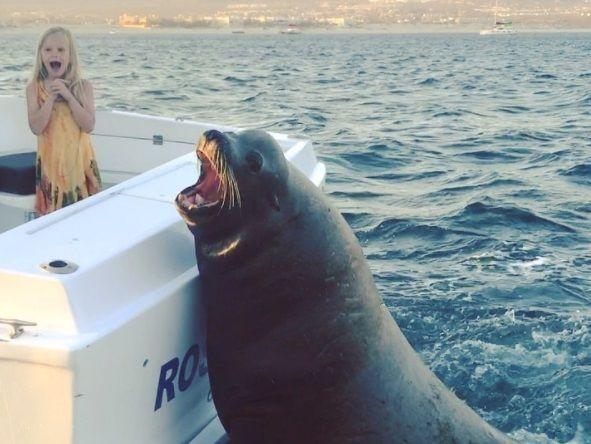 Тюлень выпрашивал рыбу