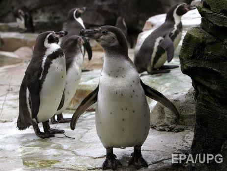 ВЧили отказались добывать железную руду ради спасения пингвинов
