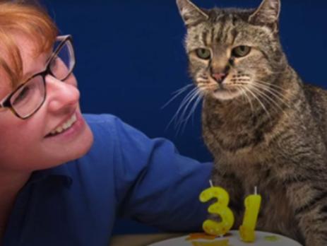 У Британії помер найстаріший кіт у світі