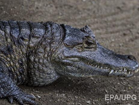 В Шри-Ланке крокодил растерзал журналиста Financial Times