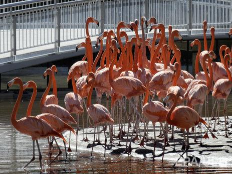 Розовые фламинго впервый раз появились вУкраинском государстве