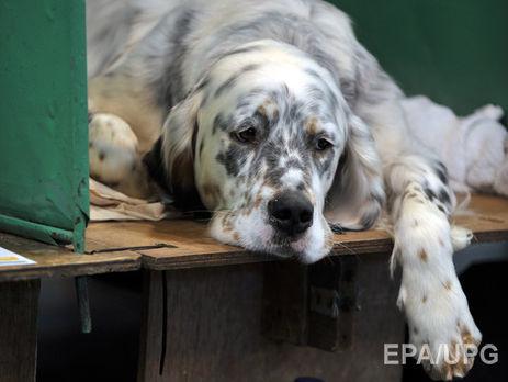 Італійка домоглася лікарняного начас догляду захворим собакою