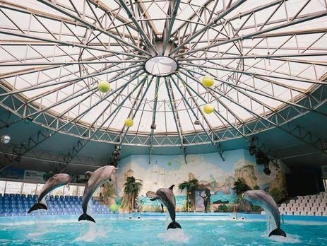 Киевские дельфины иморские котики сменили прописку наодесский дельфинарий