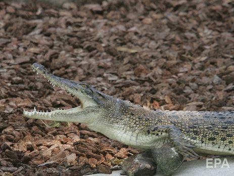 ВБелгород-Днестровском с 5-ого  этажа жилого дома упал крокодил