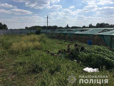 ВНиколаевской области изъяли крупную партию конопли
