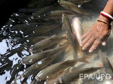 В аннексированный Крым не пустили рыбу из Аргентины