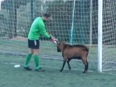 На Крите футбольный матч остановлен из-за козла