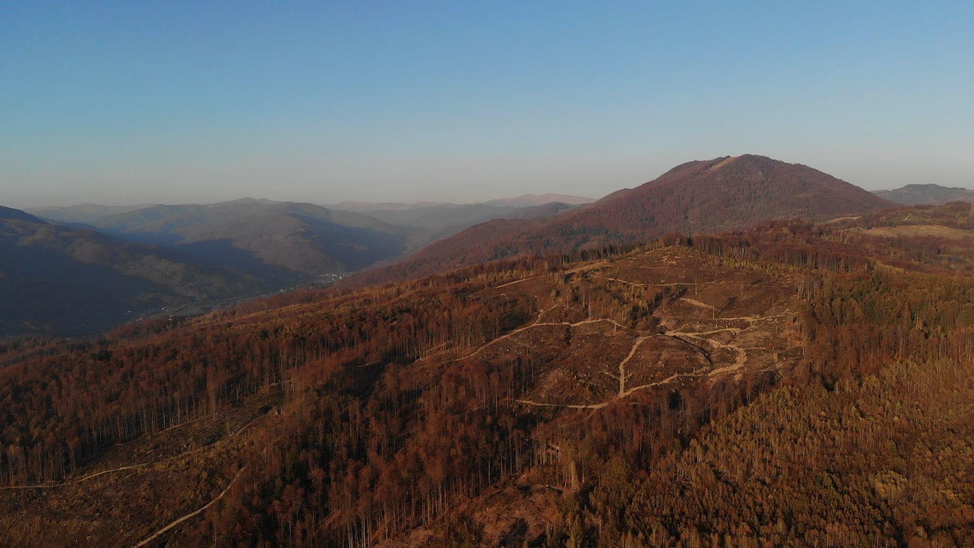 Earthsight сфотографировала места незаконной рубки леса на территории Фото: earthsight.org.uk