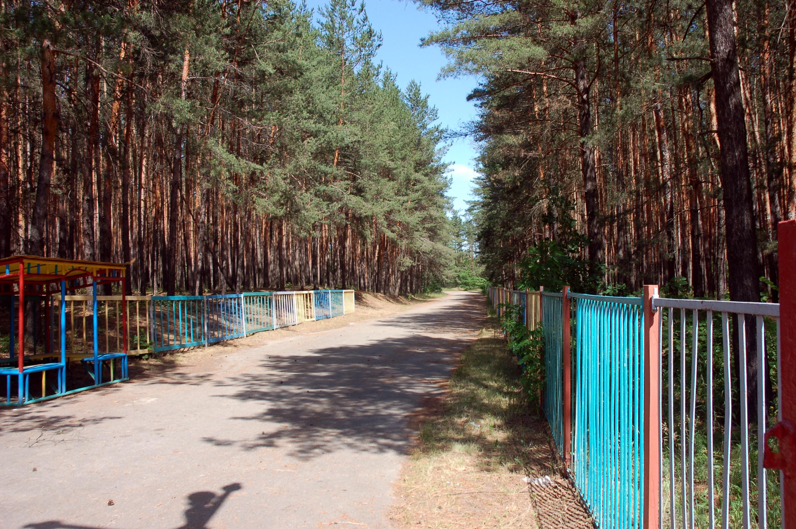 Лагерь, в котором поселили жителей Славянска, находится в сосновом лесу