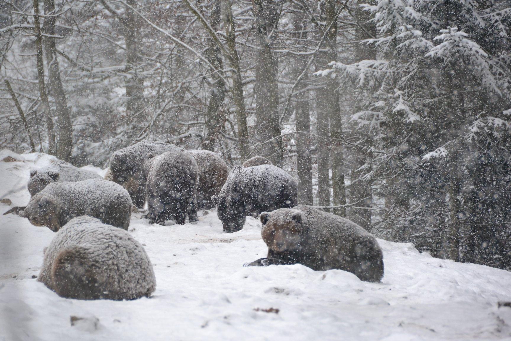"""Фотография сделана 25 декабря 2019 года. Фото: Національний природний парк """"Синевир""""/ Facebook"""