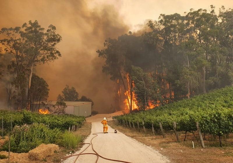 Пожарный и коала наблюдают за горящим лесом, Иден Хиллз, Южная Австралия, 22 декабря 2019 года. Фото: Eden Hills Country Fire Service / Facebook