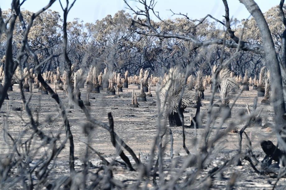 Остров Кенгуру после пожара, 6 января 2020 года. Фото: EPA