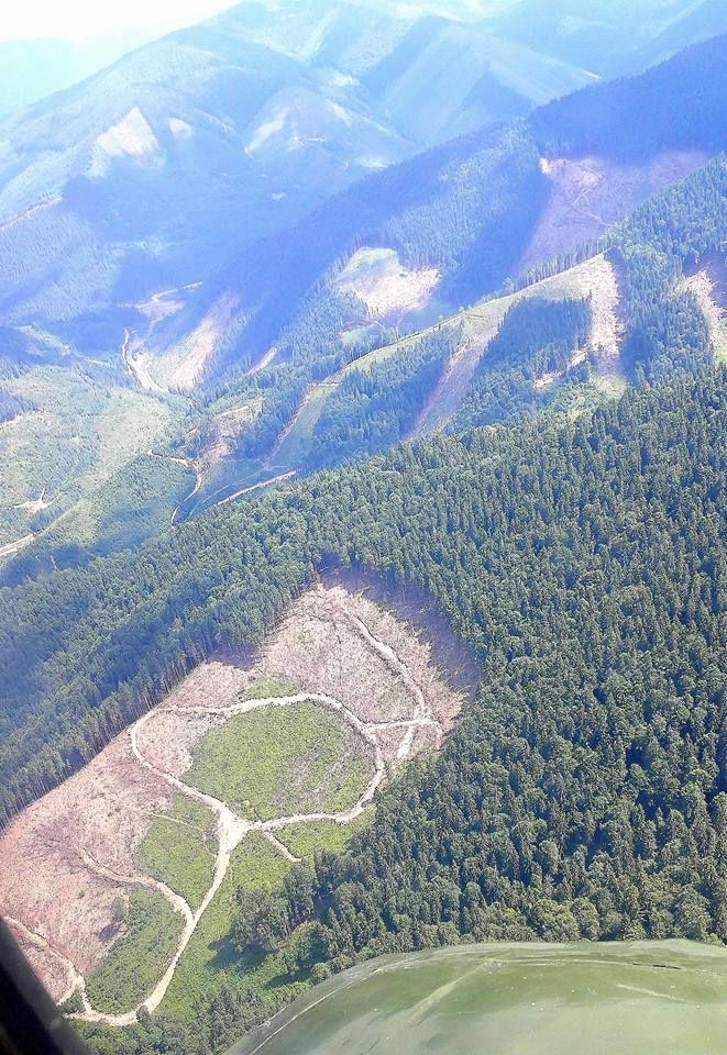 вырубка карпатских лесов фото где изготовляются